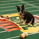 Puppy Bowl 2013: The Cutest Game Of The Year