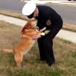 Dog Battling Cancer Reunites With Soldier