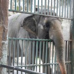 Beatles Legend Bargains For Elephant's Freedom
