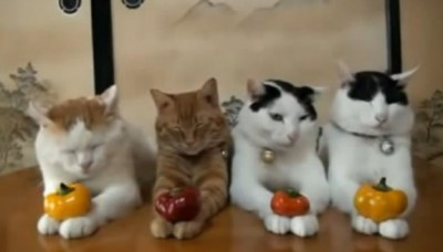 Cute cats calmly cuddle with fruits on their paws.