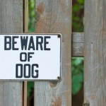 Animal Laws Every UK Pet Parent Should Know