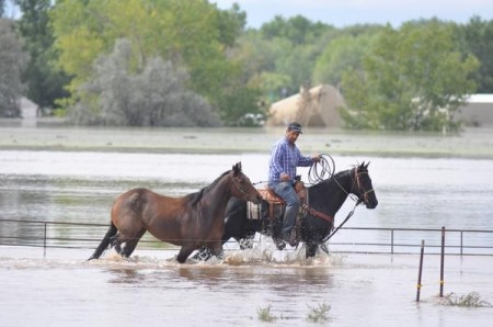 Horse in flood 450x298 Residents Rescue Livestock In Colorado Floods