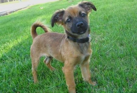10 Reasons Mutts & Mixed Breeds Rock