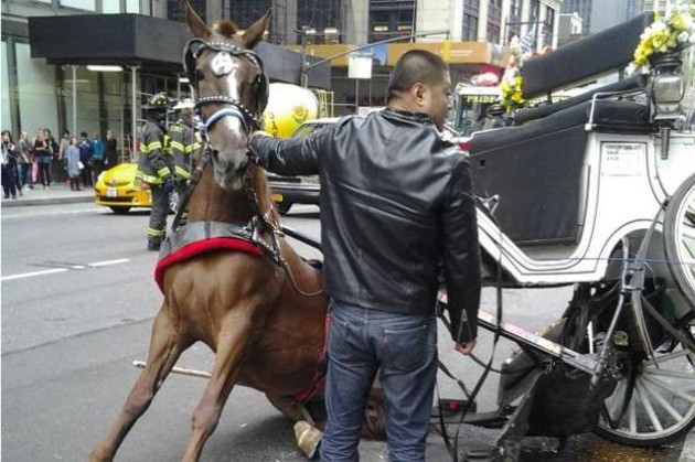 A horse from the Manhattan Carriage Company was pinned under a carriage after it collapsed on the animal near Columbus Circle. Photo Credit: DNAinfo/Garth Burton