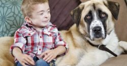 owen and haatchi, boy and dog, dogs, animals, pets, puppies