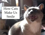 how cats make us smile video
