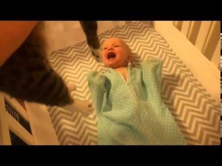 Baby Sees A Cat For The Very First TIme