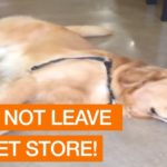 Dog Doesn't Want To Leave Pet Store