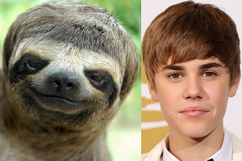 And finally, sloth or the Biebs? Photo Credit: Buzzfeed.com
