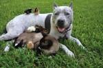 pitbulls should be banned