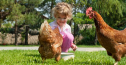 <p>Chickens may be smarter than you think. Photo Credit: Shutterstock</p>