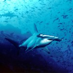 EU Slices Loopholes In Shark Finning Ban