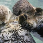 Did You Know…? 15 Adorable Animal Facts