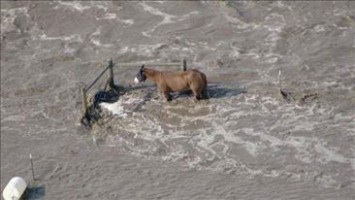 A lone horse stands tied to a fence with floodwater surging up to the animal's torso. Fortunately, the horse was later rescued. Photo Credit: KUSA_9 News