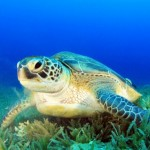 Shell-ebrate World Turtle Day! Save Sea Turtles From Extinction