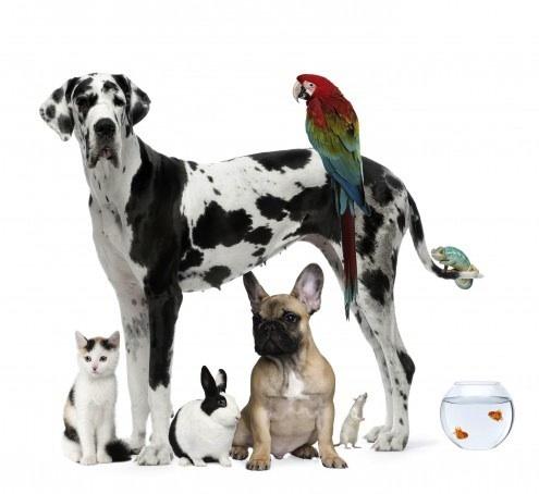 PETS variety adopt