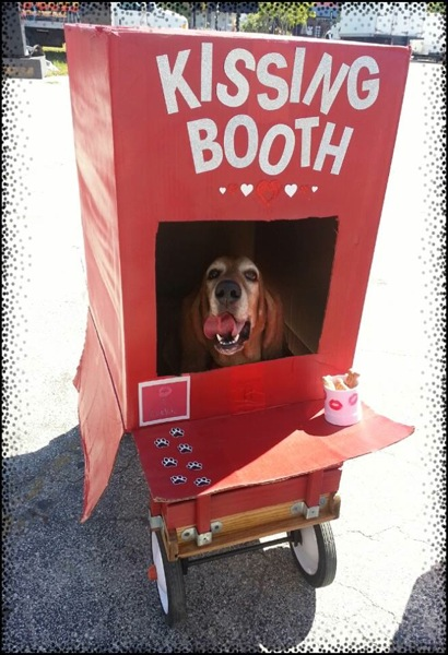 Dog In Kissing Booth Halloween Costume Global Animal