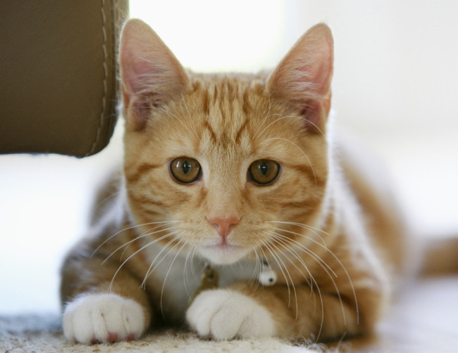 cat, kitten, kitty, pictures of animals, pictures of cats, pictures of kittens