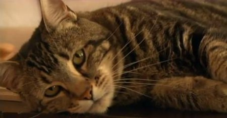 "Tara the ""Hero Cat"" will throw out the first pitch at Tuesday's Bakersfield Blaze game./Photo credit: independent.co.uk"