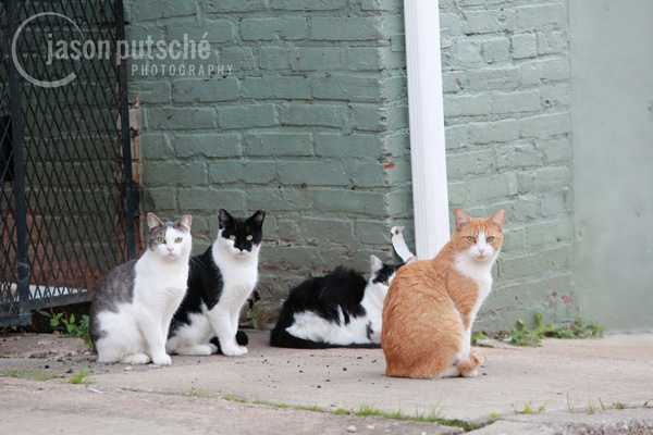 Four stray cats. Photo Credit: Jason and Elizabeth Putsche