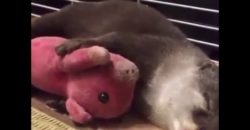 This-otter-talks-in-his-sleep-This-is-too-adorable-😭