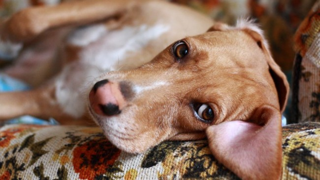 Get These Household Items Away From Your Pets