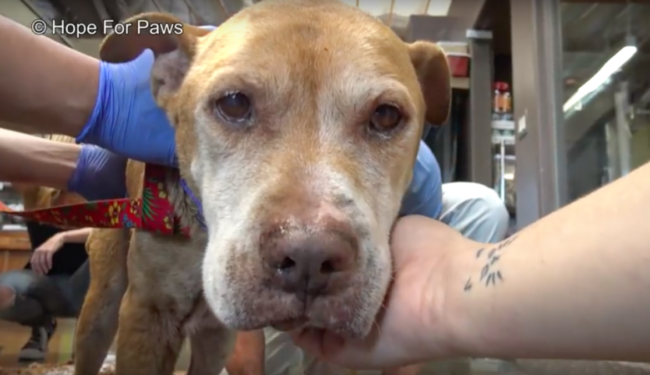 No Dog Left Behind: Senior Dog Rescued After Family Moves Away
